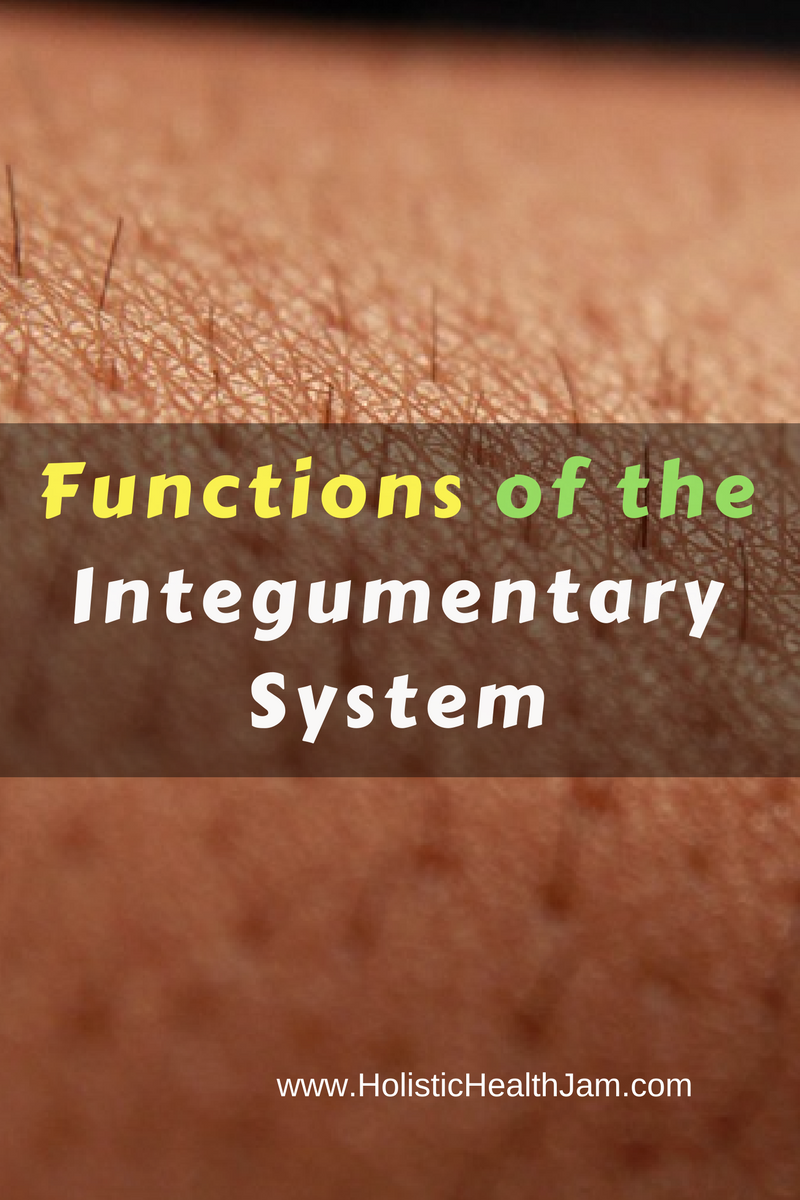 Functions, Organs and Disorders of the Integumentary System